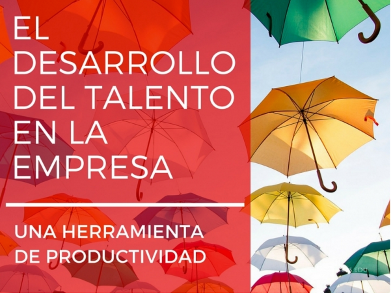 mhp-blog-el-desarrollo-del-talento-en-la-empresa